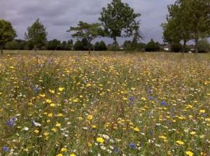 Cheam Meadow (London Borough of Sutton)